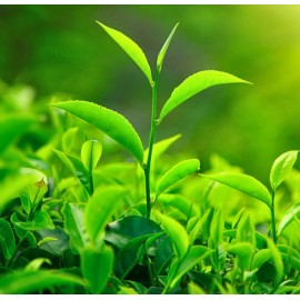 Женская туалетная вода Зеленый Чай The Vert 100 мл