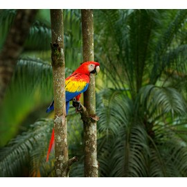 Женские духи Tropicale Tentation Тропическое искушение 100 мл